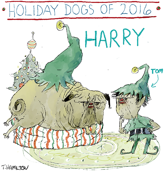 holiday-dog-5-2016