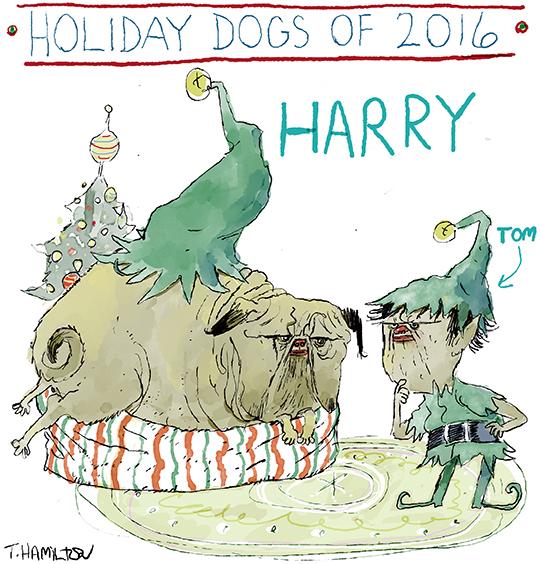 holiday-dog-5-2016